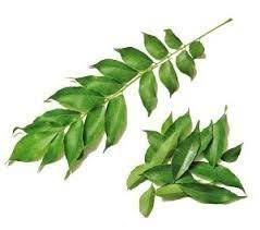 India Curry leaves